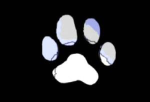 Zooskool Megapack (20.44 GB 95 videos)
