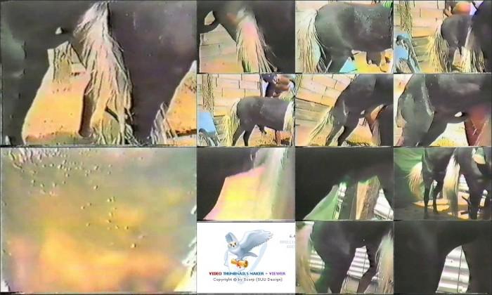 AnimalSexFun Horse Zoosex 48