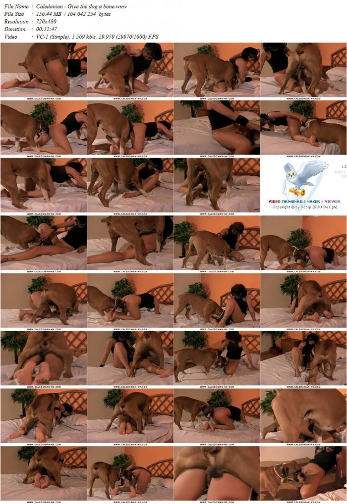 Caledonian - Give the dog a bone.wmv